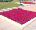 红色花卉花坛图片