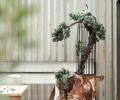 成都世茂城现代中式装修样板间-成都大树装饰