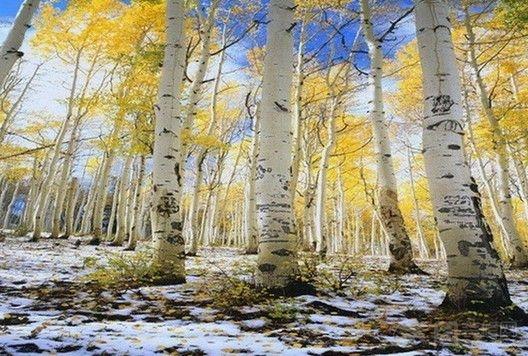 秋天流水油画风景图