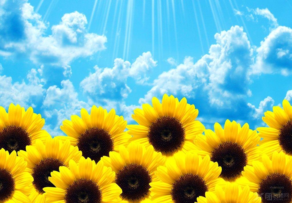 感受向日葵的唯美 电脑壁纸大全欣赏