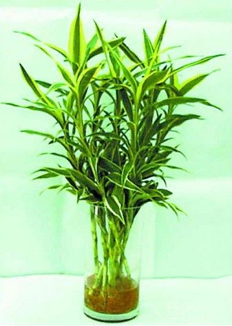 水生植物种类介绍-水生植物怎么养