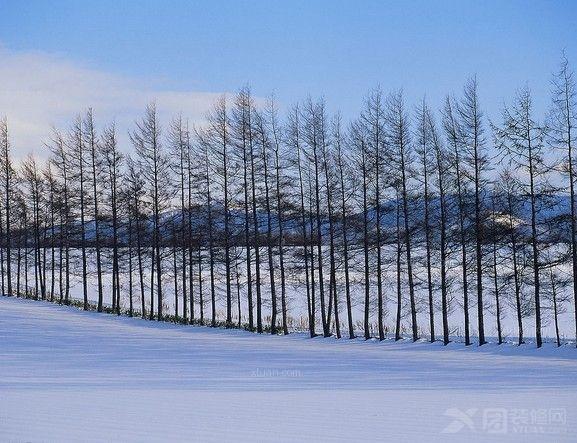 冬天的可爱之处