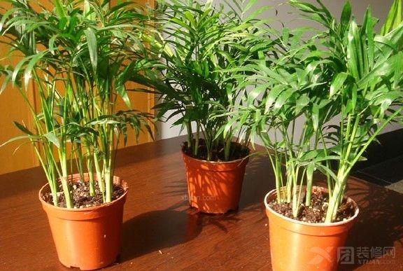 家居植物摆放-风水无外不在