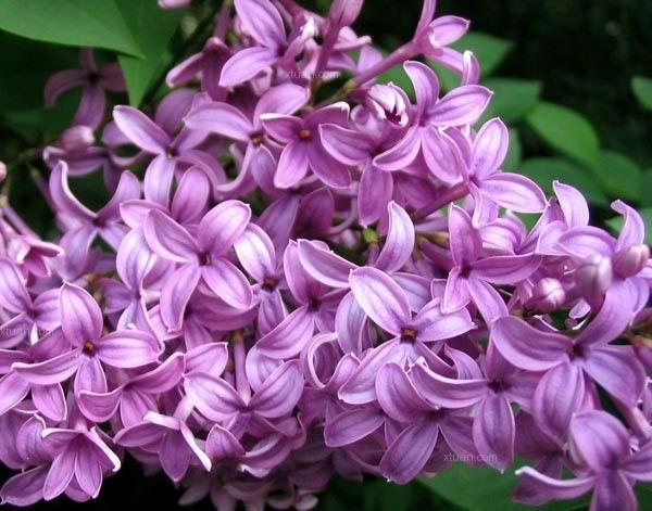 什么花适合放在卧室——立体绿化居室的花卉