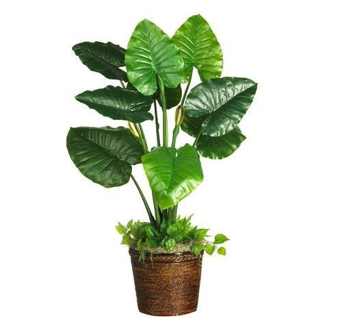 植物顶视图矢量图
