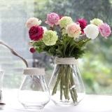 客厅摆放这些花,可以旺桃花运哦!