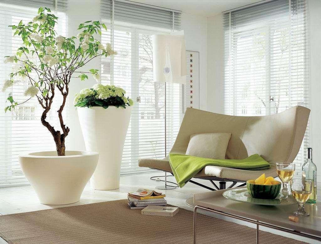 客厅风水之客厅盆栽的风水讲究
