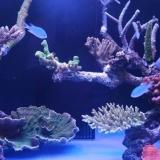 鱼缸摆放风水|鱼缸放在什么位置招财?